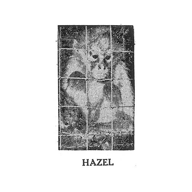 Hazel the Monkey