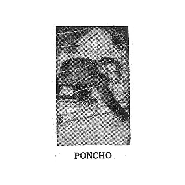 PONCHO the Monkey