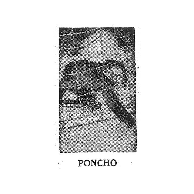 PONCHO the Monkey